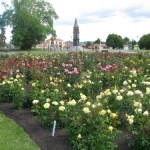 Klamath Falls Rose Garden – Rotorua