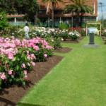 Parnell Rose Garden – Auckland