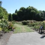 Centennial Rose Garden – Blenheim