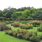 Lady Norwood Rose Garden – Wellington