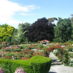 Central Rose Garden, Hagley Park, Christchurch