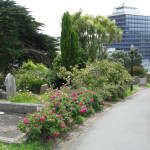 Bolton St Memorial Garden – Wellington