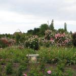 Cheops Garden – Hastings