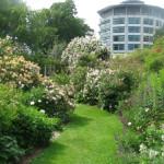 Heritage Rose Garden – Christchurch