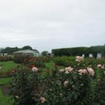 Robbins Park – Tauranga