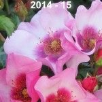 Rose Review 2014 - 15 cover