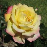 IMG_9830 Peace (4) - Copy