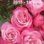 Cover Rose Review 2015-16 NZRS