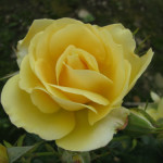 Amorosa (3)-w500-h375