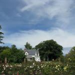 Samuels Rose Garden – Nelson