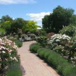 Beverley Park – Christchurch