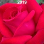 2019 NZ Rose Review